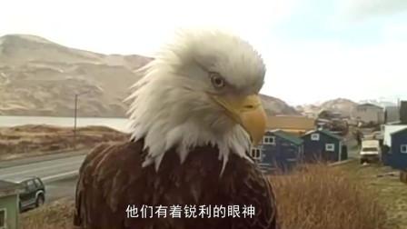 老鹰俯冲而下抓住小女孩,试图将其带上天,下一秒忍住别笑!