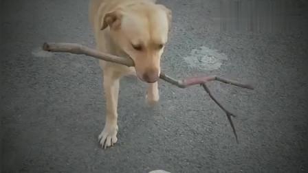 搞笑视频:你这个动作还能难倒我,我可是练杂