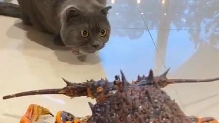 你不是嚷嚷着要吃虾吗?咋不吃了?这可是澳洲大龙虾啊老贵了
