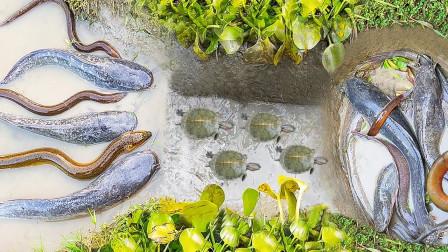 农民捕下神奇陷阱,鲜美大鱼纷纷上当,网友:这能设计抓老鼠吗?
