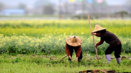 """返乡潮后,农村兴起""""三不风""""?不种地、不养殖、不外出,图啥?"""