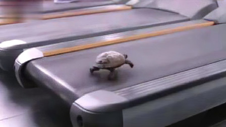 主人为了测试乌龟跑步速度,将它放到跑步机上,一开机当场呆住!