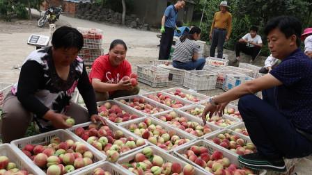 村里卖桃子,胖妹忙的欢,肚子饿得咕咕叫,回家做份煲仔饭,吃过瘾