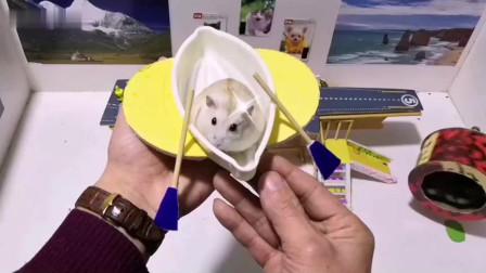 仓鼠爸爸带着仓鼠宝宝参观航空母舰模型,没想到仓鼠宝宝们竟打起来啦!