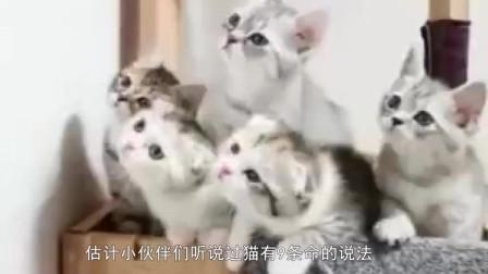 猫为什么摔不死?难道它真有九条命?镜头放慢20倍揭秘!