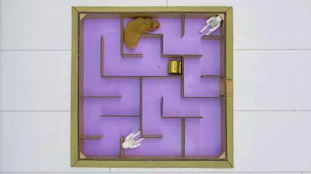 小姐姐用纸板给小仓鼠制作6层的迷宫,小仓鼠能逃出迷宫吗?