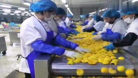 黄桃罐头生产流水线,广西妹子真心是精挑细选啊