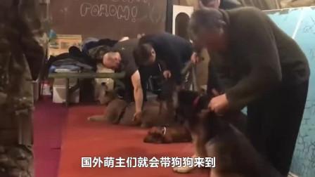 美洲狮加入宠物训练营,可一旁狗狗快崩溃了,狗狗害怕:看不见我!