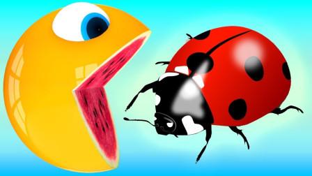 小球球吃雪糕遭遇瓢虫染色益智动画学颜色