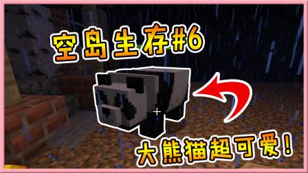 我的世界空岛生存6:挖到一只超可爱大熊猫!却跟恼鬼结了梁子!