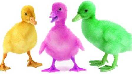 让孩子们学习认识动物和认识颜色 孩子们的动物玩具