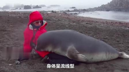 男子潜水偶遇海豹,拉着男子手不松,直到这一举动才明白它小心思!