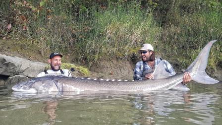 男子捕获巨型怪鱼,背部竟有不明纹路,这种鱼世界上只有一只?