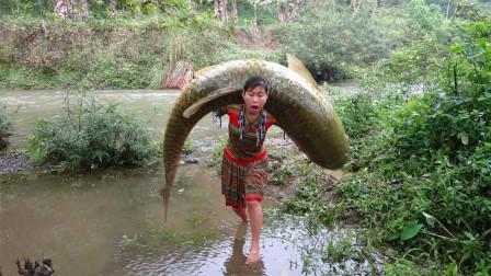 农民户外抓鱼,发现一条万年不遇的大鱼,这鱼值个房子钱吗?