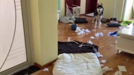 主人:我看错了,这不是我的狗,这不是我的家!