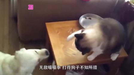 猫咪看自家狗狗被打,气概汹汹立马去干架,镜头记录全过程