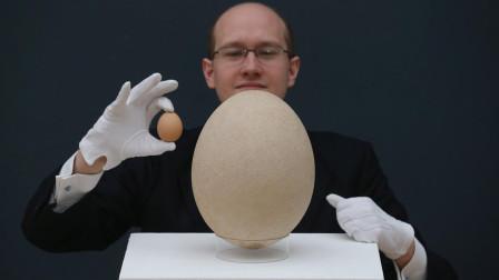 """世界上""""最大""""的鸟蛋,堪比100枚标准鸡蛋,直接卖了45万!"""