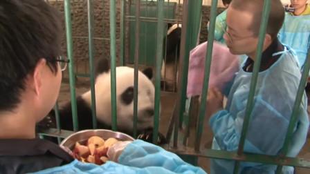 大熊猫:当国宝一点也不好,每天都有人烦你