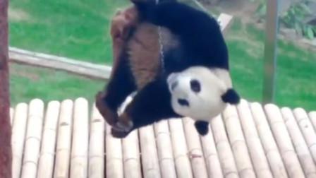 功夫熊猫是怎样炼成的,可爱的熊猫宝宝在线练功,绝世武功不好练啊