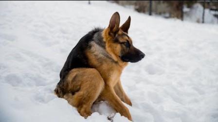 你喜欢漫威英雄吗?今天带你看卡漫威英雄在狗狗界是什么样子吧!