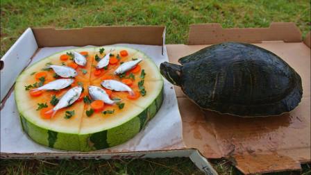 """外国小哥给野生乌龟""""送外卖"""",定制水果披萨,深得小乌龟的喜爱"""