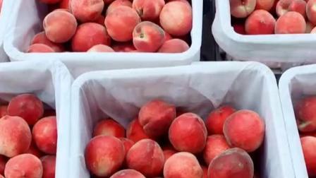 大家看一下我们家的水蜜桃,都是早上新鲜采摘的,你肯定会喜欢