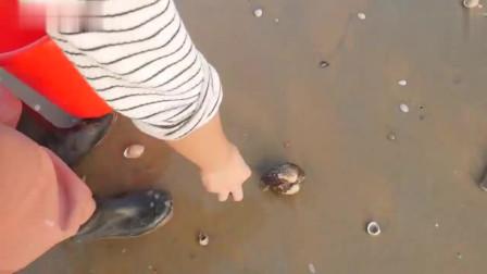 退潮后的海滩到底有多少宝贝?农村姑娘捡的这些海鲜,很值钱