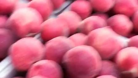 都是产地现摘的爆浆水蜜桃,绝对新鲜