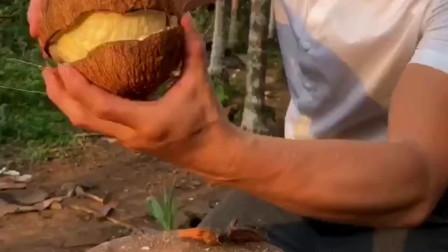 海南小伙:长了芽的椰子里面全是椰宝,对人体的功效很强大,但打开还要有特殊的手法!