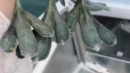 渔民捕住两只小鸭子,准备把它们放生了,这一刻把我感动了!