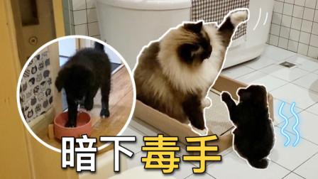 小狗不堪忍受被大猫毒打,半夜偷偷在猫水碗洗脚报复