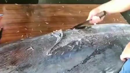 日本海鲜大厨加工巨型黑皮旗鱼,剥皮去骨刀功精湛,做成刺身超级美味