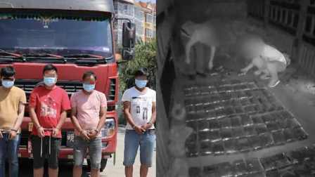 云南警方矿车中搜出69公斤冰毒,458万元毒资堆一地