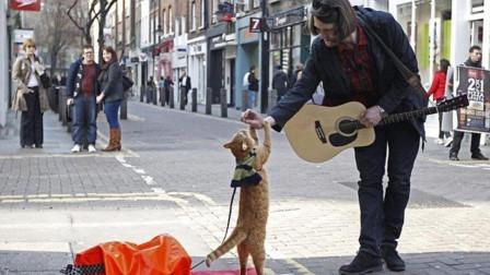 电影《流浪猫鲍勃》主角猫鲍勃去世,主人:我生命中的光熄灭了