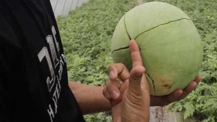 """指纹解锁""""爱马仕""""西瓜:富养的上海南汇8424你吃过吗?"""