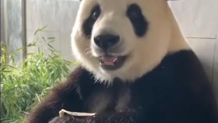 沙雕搞笑动物合集1 抖音最新搞笑动物视频合集 搞笑猫狗视频 动物世界 抖音搞笑视频