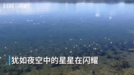 """30秒丨夏日泸沽湖: 最爱你的""""水性杨花"""""""