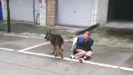 这只狗是在保护还是在伤害人,看不懂
