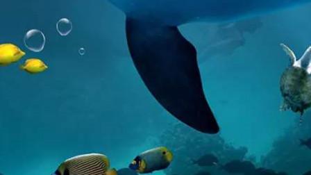 成都海昌极地海洋世界,感受海底世界,假期旅游最佳去处