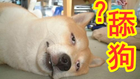 """""""舔狗""""究竟应该算可怜还是活该?"""