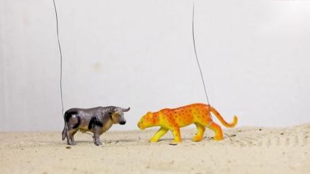 勇敢的老虎与水牛大象打倒狮子救出长颈鹿.mp4