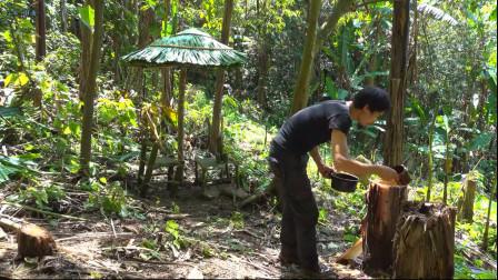 小哥丛林生存,搭建一个小凉亭,坐在下面喝口茶,很享受
