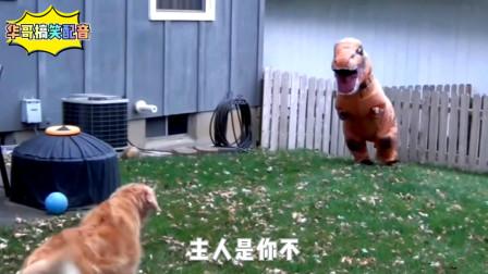 搞笑配音:男子装扮成恐龙吓唬金毛,起跑瞬间也太搞笑了!