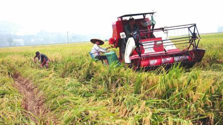 曾经一斤2000元,现在百元无人吃,农民叫苦:你们变得太快!