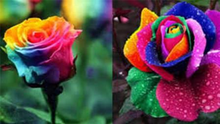 世界上最贵的玫瑰花,价值2600多万,蓝色妖姬跟它比就是弟弟