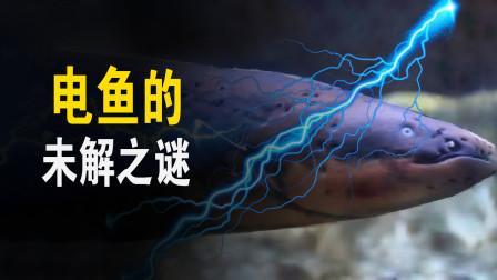 电鱼的未解之谜,为什么不会电到自己?