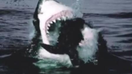 世界上最大的鲨鱼,海洋顶级猎食者,把鲸鱼当零食!