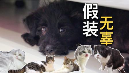 同时养15只猫1只狗是种什么体验?差点把家拆没了!