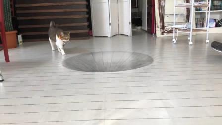 老外画了一个逼真的大坑,猫咪的反应,让人眼前一亮