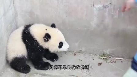 饲养员在前面走,后面跟着熊猫宝宝,奶妈:别人遛狗,我遛熊猫